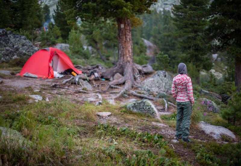 Kampierende Frau im Zelt unter Verwendung des Smartphone, der Bildfotos betrachtet stockfoto