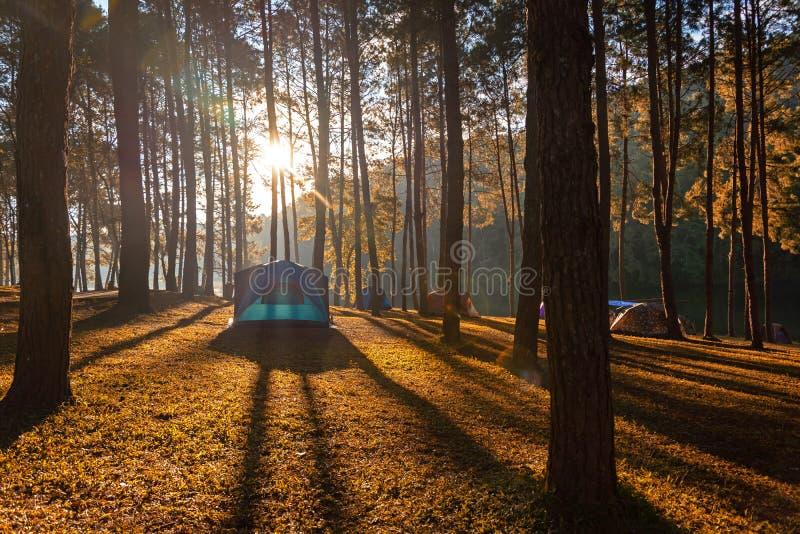 Kampierender Tourismus und Zelt der Abenteuer unter dem Ansichtkiefernwald gestalten nahe dem Wasser landschaftlich, das im Morge lizenzfreie stockfotos