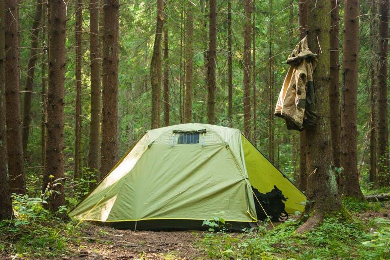 Kamping树夏天绿色森林自然太阳愉快的旅行旅行包 库存照片