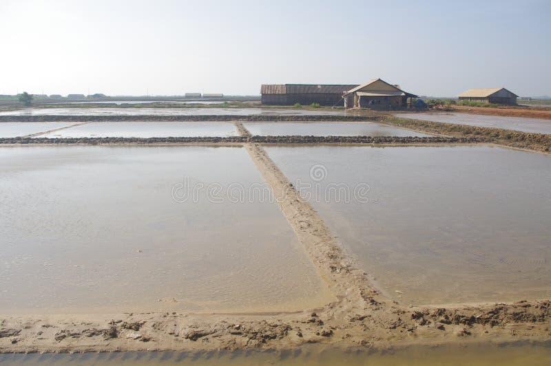 Kampot的盐领域 库存图片