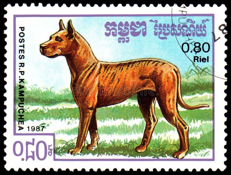 KAMPUCHEA - CIRCA 1987: postage stamp, printed in Kampuchea, shows a German Mastiff dog, series breeds dogs. KAMPUCHEA - CIRCA 1987: a postage stamp, printed in stock photo