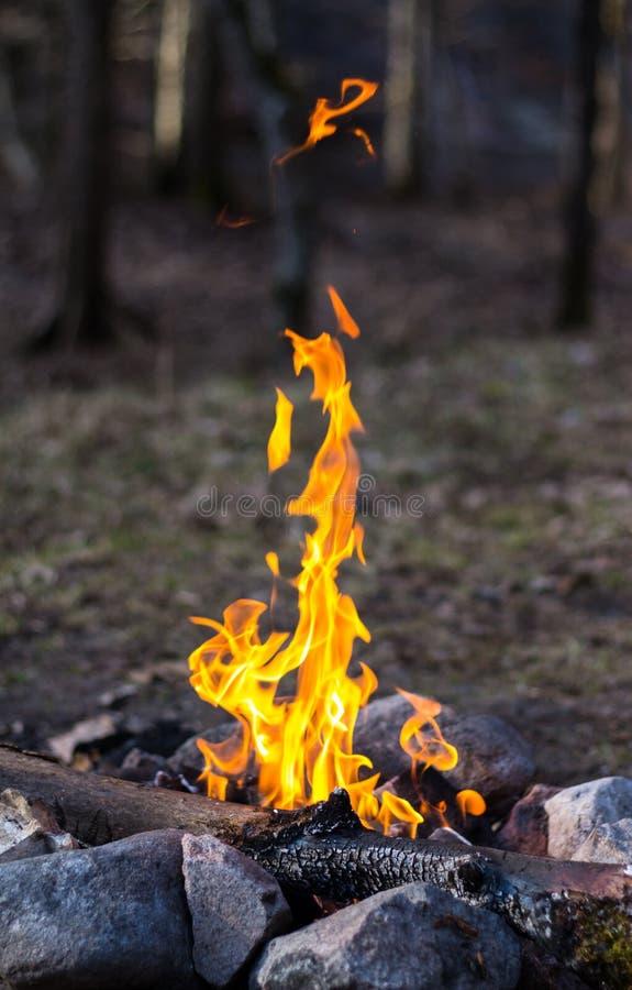 Kampvuur met grote vlammen in schemer royalty-vrije stock fotografie