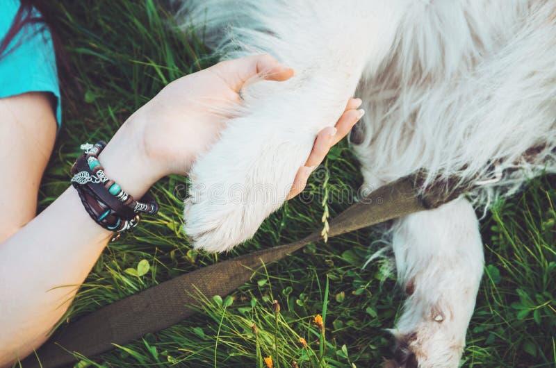 Kamratskap mellan människan och djuret, hund ger kvinnan tafsar, handskakningen Hipsterflicka, hennes husdjur - bästa vänför evig arkivbild