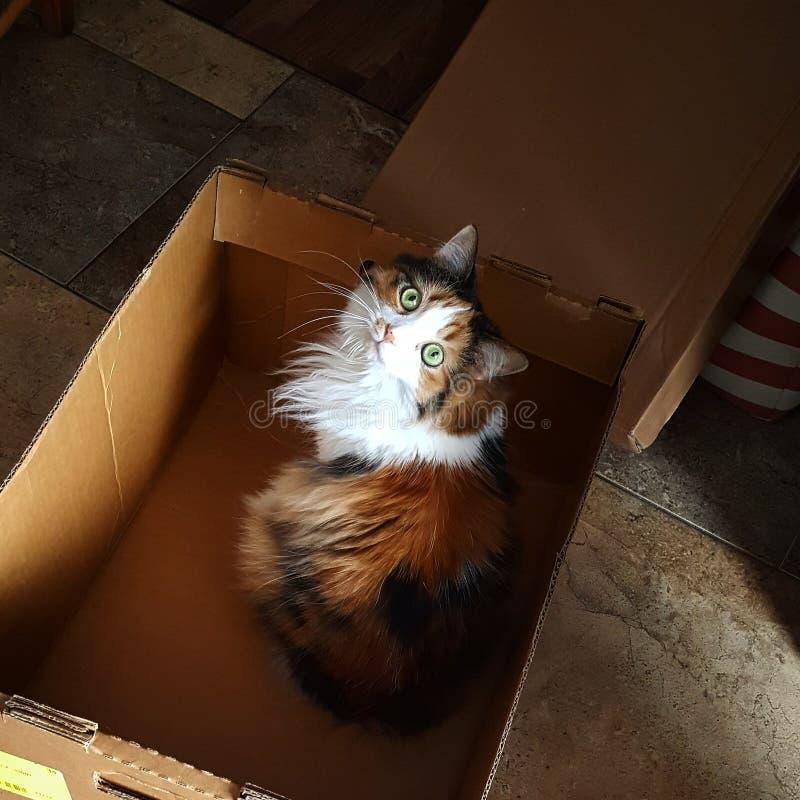 Kamy кот хочет помочь двинуть стоковые изображения