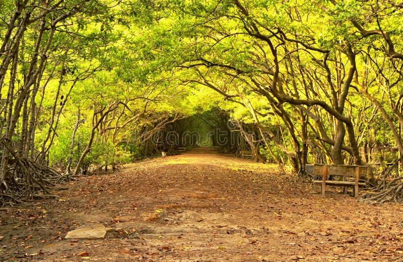 Kan van de Zuid- giomangrove bosvietnam royalty-vrije stock afbeeldingen