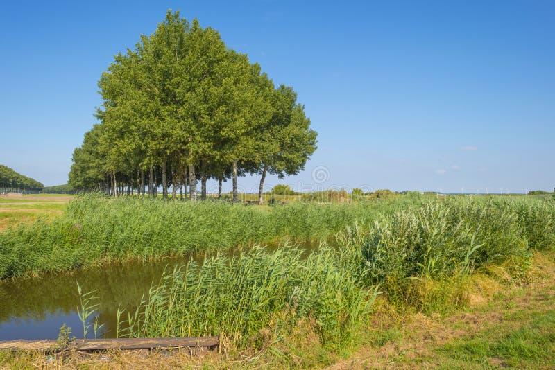 Kanał w polu pod niebieskim niebem w świetle słonecznym w lecie obrazy royalty free