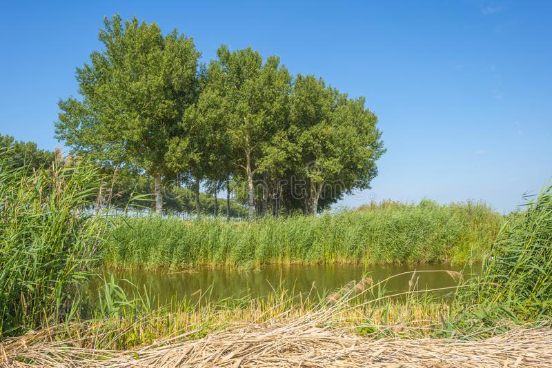 Kanał w polu pod niebieskim niebem w świetle słonecznym w lecie fotografia stock