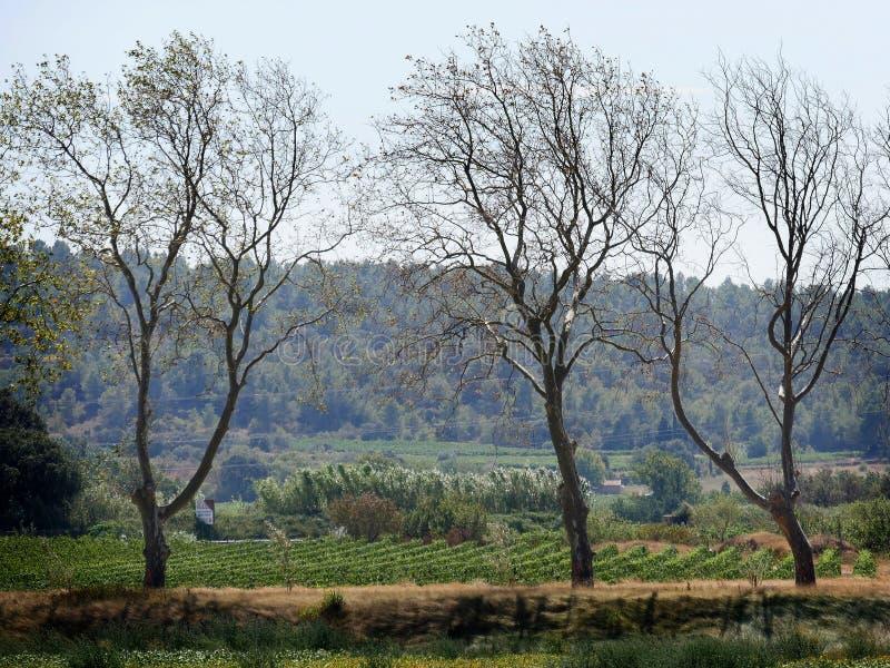 Kanału du Midi wieś w Aude, Languedoc Roussillon obraz royalty free