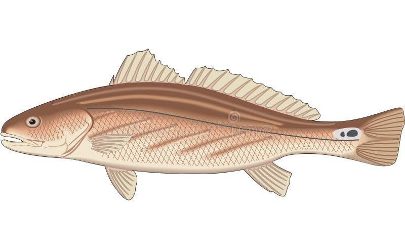 Kanaal Bass Illustration stock illustratie
