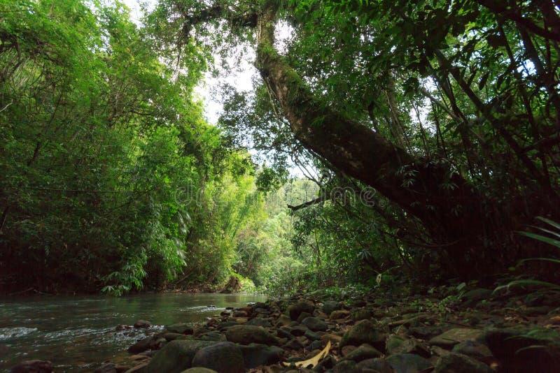 Kanaal in regenwoud royalty-vrije stock foto
