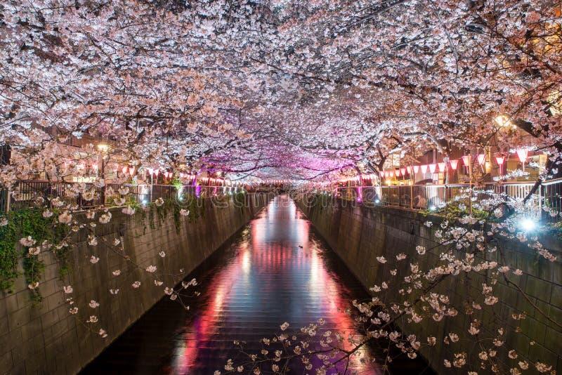 Kanaal van kersen het bloesem gevoerde Meguro bij nacht in Tokyo, Japan Spri royalty-vrije stock afbeelding