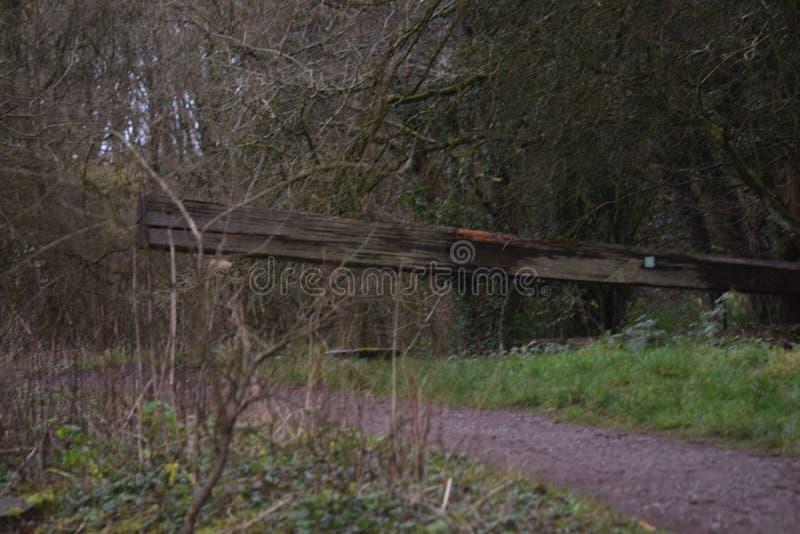 Kanaaleigenschap in hout nog reamins bij overwoekerd niet meer gebruikt kanaal stock foto's