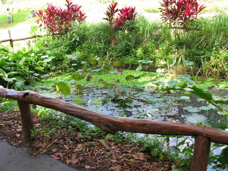 Kanaalpool, La Mesa Ecopark, Quezon-Stad, Filippijnen stock foto