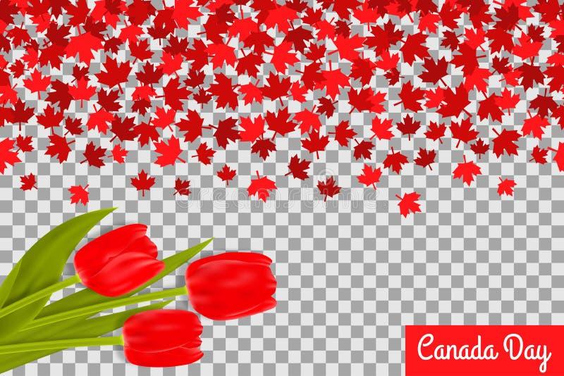 Kanada dnia tło z klonowymi liśćmi i tulipanami dla 1st Lipa świętowanie na przejrzystym tle ilustracji