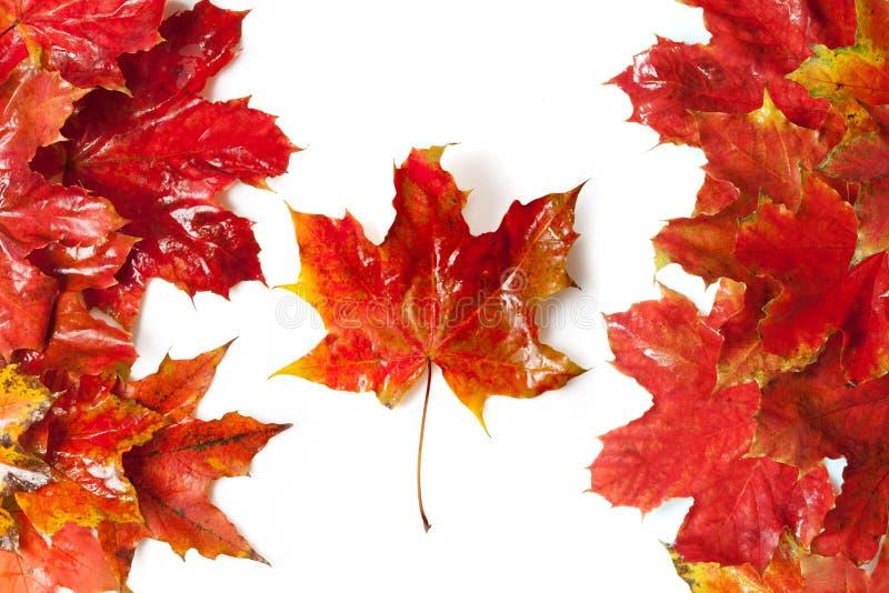 Kanada flagga royaltyfri foto
