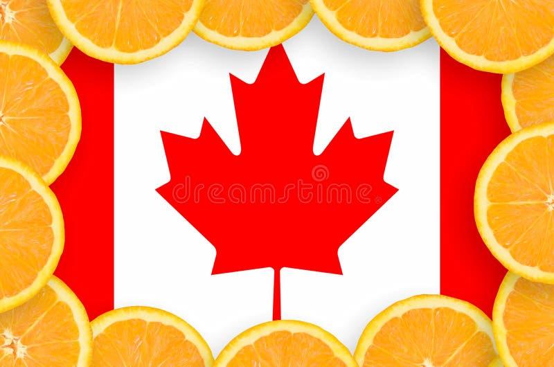 Kanada flagga i ny citrusfruktskivaram arkivfoton
