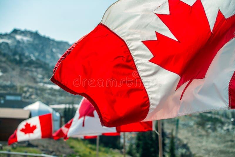 Kanada sjunker att vinka på vinden i bergscenario arkivfoton