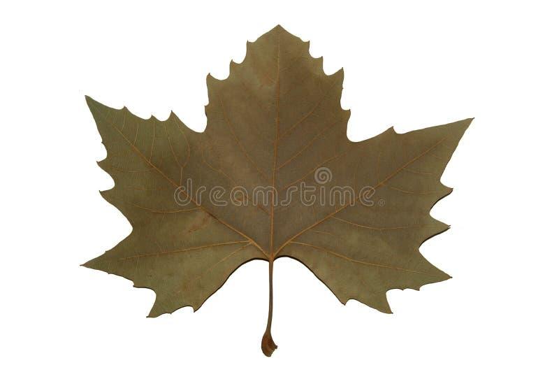Kanada-Symbol