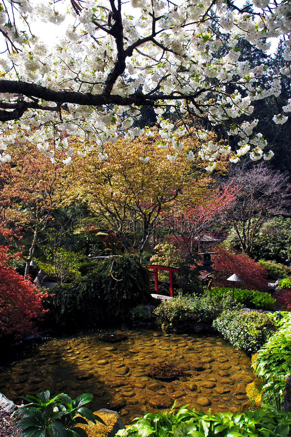 Kanada trädgårds- vancouver royaltyfria foton