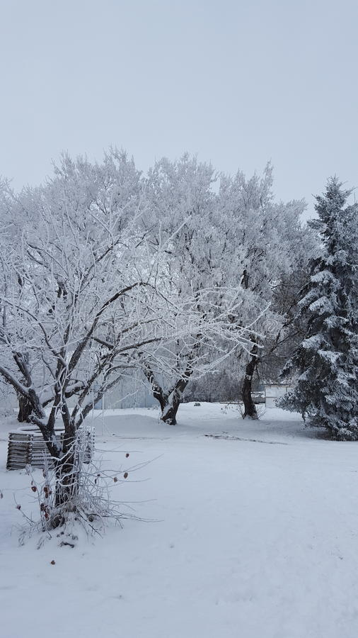 Kanada vinter royaltyfri fotografi