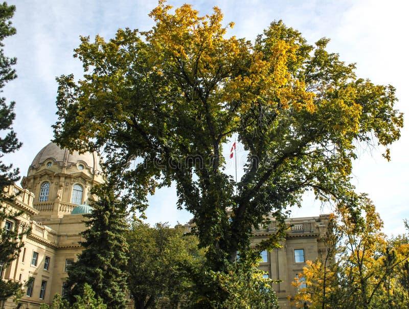 Kanadensisk flagga sedda ändå träd på lagstiftnings- jordning royaltyfri foto