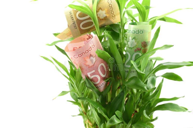 Kanadensiska dollar i sidor för grön växt, begrepp av att få utdelningar eller retur från dina pengar, investerar den för bättre  arkivbild