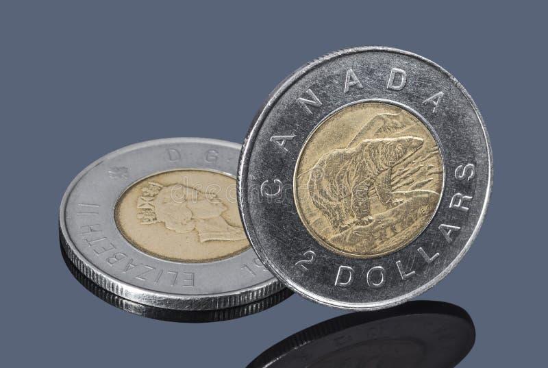 Kanadensiska två-dollar mynt på mörk grå bakgrund royaltyfria bilder