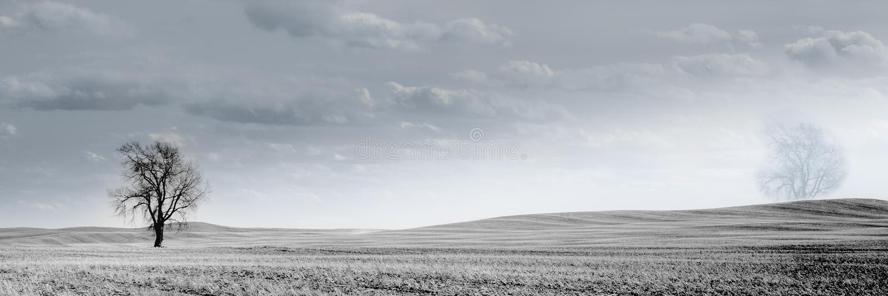 Kanadensiskt prärievetefält fotografering för bildbyråer
