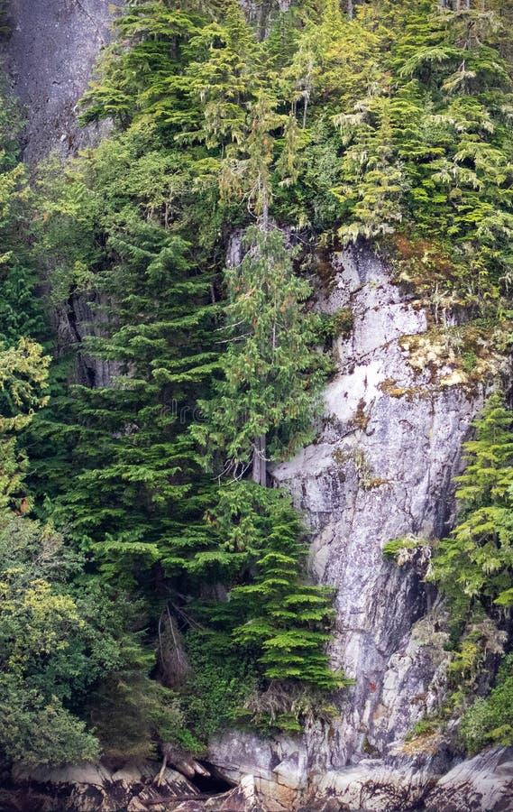 Kanadische Felsen- und Baumansicht stockfotos