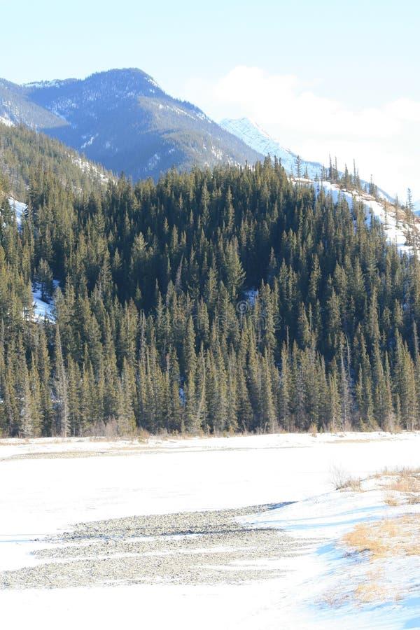 Kanadische Rockies zeigt die reine Natur lizenzfreie stockfotografie