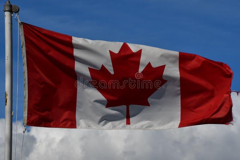 Kanadische und britische kolumbianische Flaggen, die stolz gegen den blauen Himmel wellenartig bewegen stockfotos