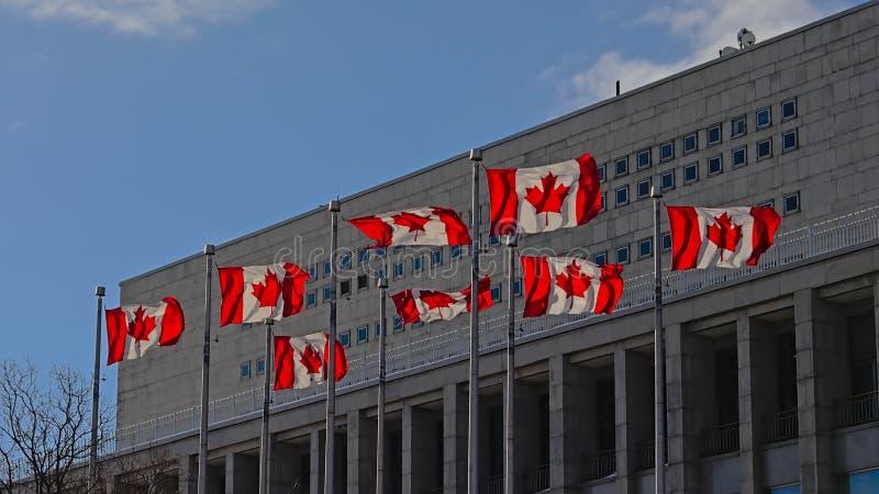 Kanadyjczyk zaznacza falowanie w wiatrze przed nowożytnym budynkiem obrazy stock