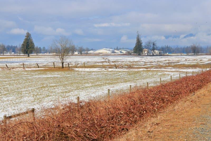 Kanadyjska zima i Rolniczy krajobraz zdjęcia royalty free