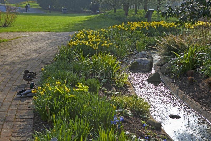 Kanadyjski gąski Branta canadensis blisko jeziora przy Królewskimi ogródami botanicznymi przy Kew, Londyn, Anglia obraz royalty free