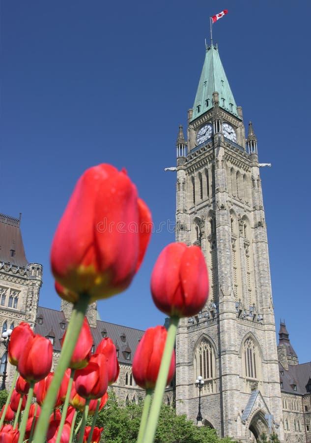 Kanadyjski parlament, tulipanu festiwal zdjęcie royalty free