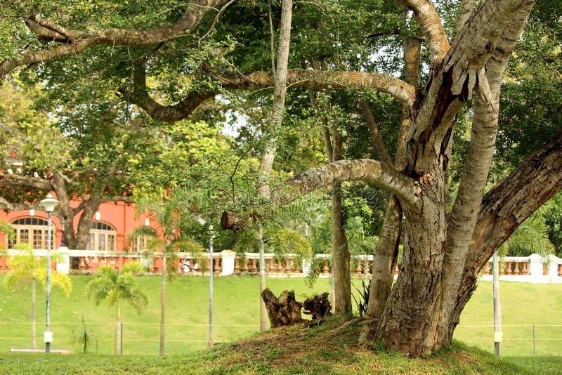 Kanaka Kunnu slottträdgårdar i Kerala, Indien arkivfoto
