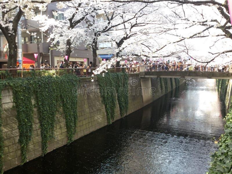 Kanal av Nakameguro fotografering för bildbyråer