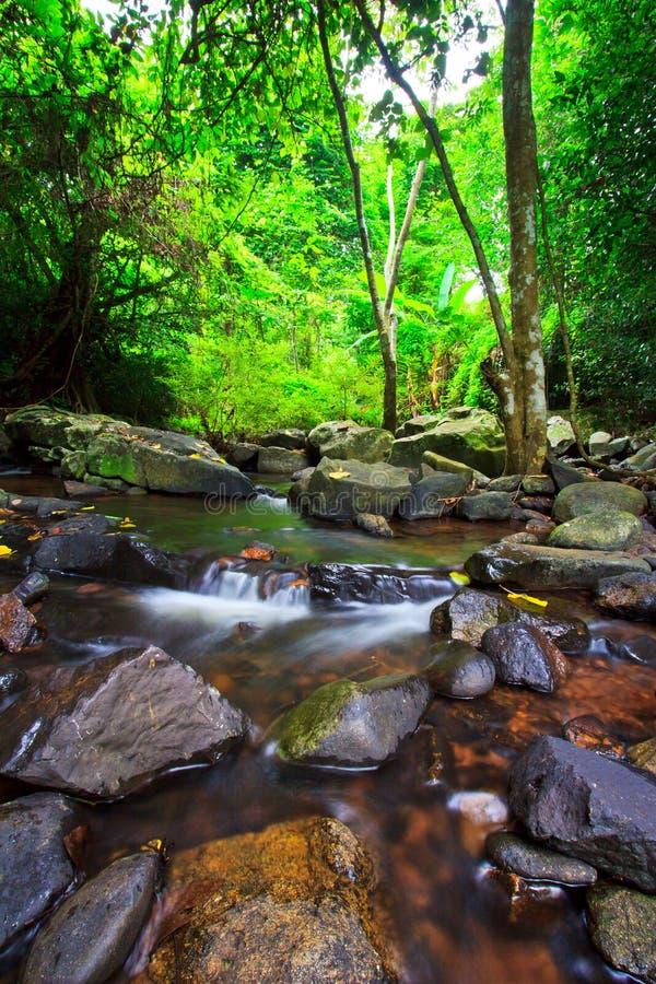 Kanal i den tropiska skogen royaltyfria foton