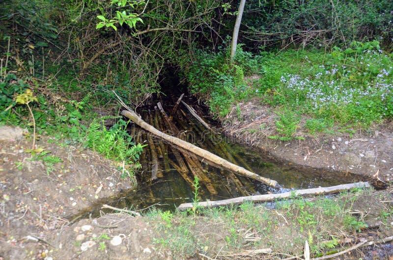 Kanal mit Bamboo-Zweigstelle in Water Himachal Pradesh Indien stockbild