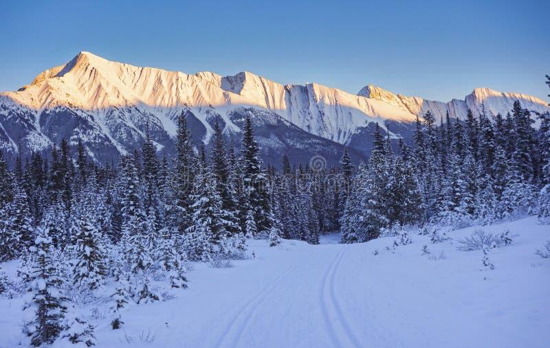 Kananaskis Cross Country Ski Trail stock photo