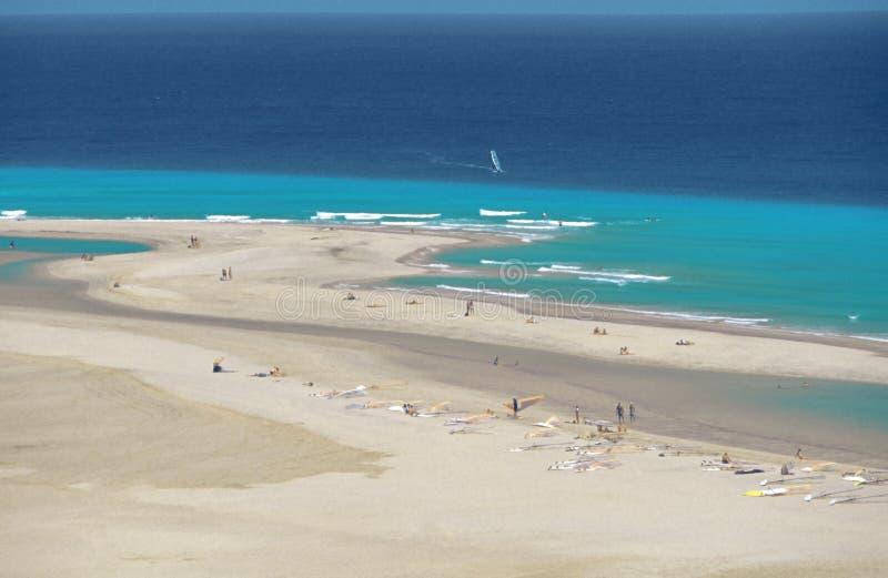 kanariefågelfuerteventura öar spain royaltyfria foton