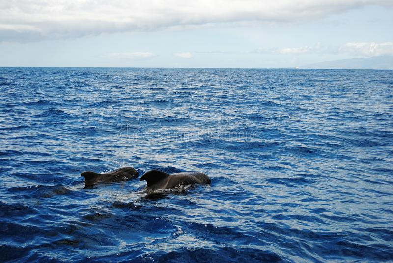 Kanarische Inseln, Teneriffa, Atlantik stockfotos