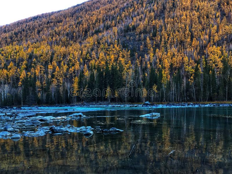 Kanas Lake in Autumn royalty free stock images