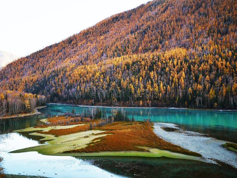 Kanas Lake in Autumn royalty free stock image