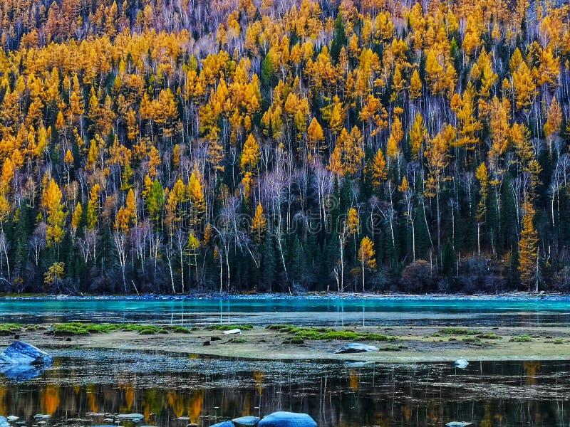 Kanas Lake in Autumn royalty free stock photo