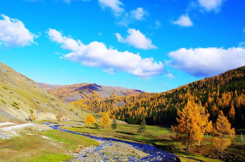 Kanas van de herfst stock afbeelding