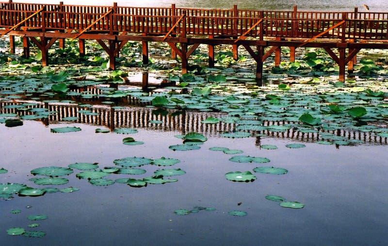 kandawgyi湖仰光 图库摄影