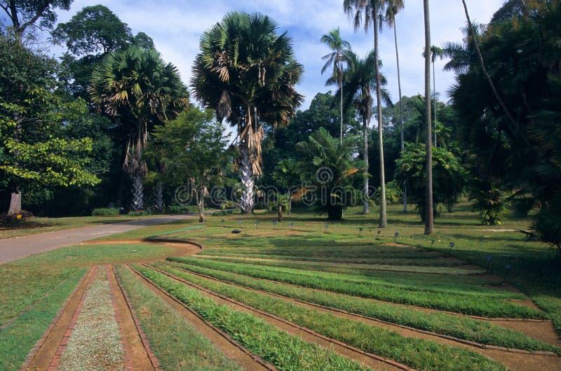 kandy peradeniya βοτανικών κήπων στοκ εικόνες