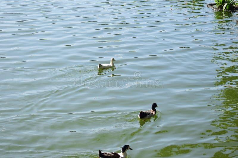 Kandy sjön royaltyfria foton