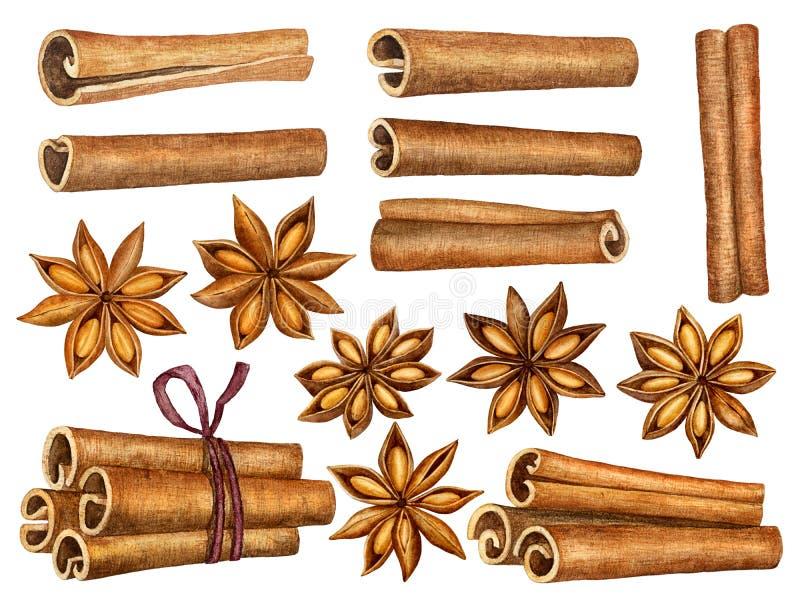 Kaneel en anijsplantsterren geplaatst die op witte achtergrond worden geïsoleerd Van keukenkruiden en kruiden inzameling Traditio stock illustratie